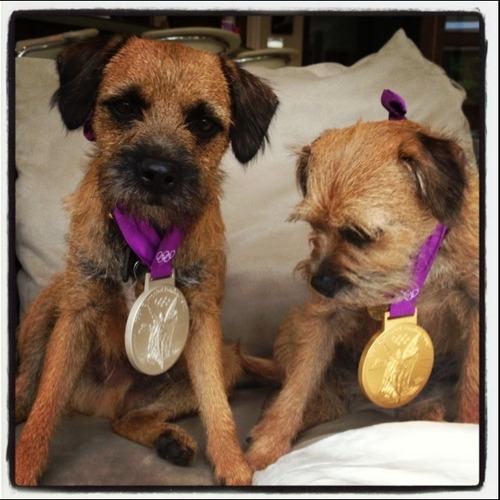 Andy Murray and Kim Sears' dogs Maggie May and Rusty modeling Andy's gold and silver tennis medals