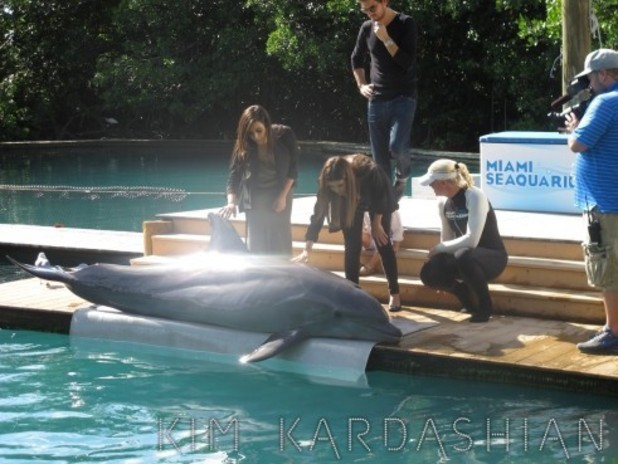 Kim and Kourtney Kardashian touching a dolphin at the aquarium in Miami