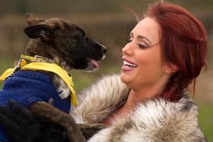 Dog Rescue Centre In Wickford Essex