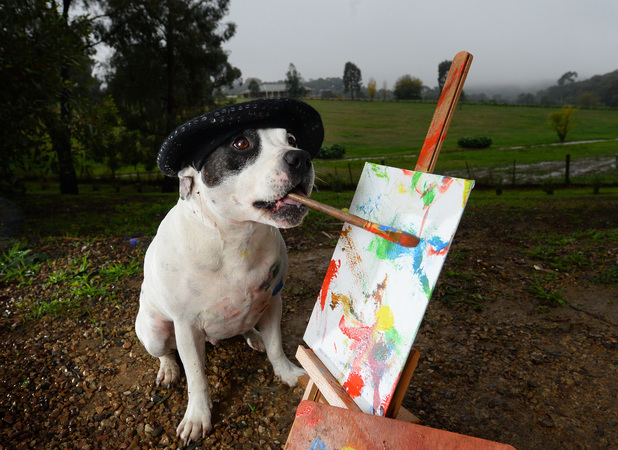 Chester, the painting dog