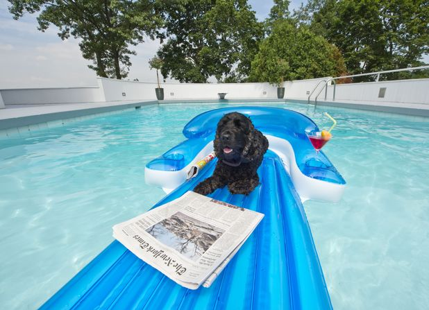 Cocker spaniels Mahler and Venus relax on the inflatable raft 11 Jul 2013