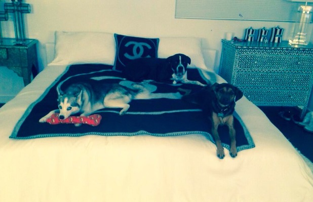 Miley Cyrus shares snap with Twitter fans of her bed companions - her dogs! Nov 2 2013