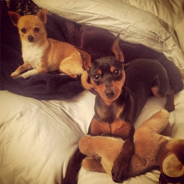 Paris Hilton shares a pic of her dogs Peter Pan and Dollar on Instagram.