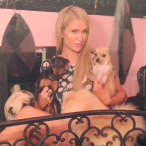 Paris Hilton plays with her dogs, Instagram picture, 2013