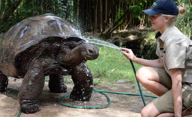 Animals cool off in Melbourne Zoo