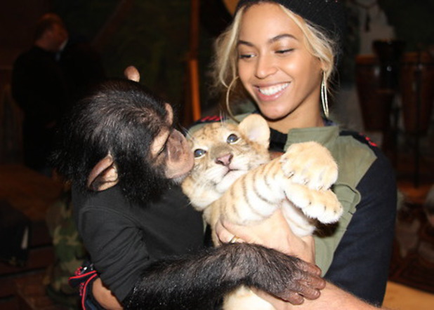 Beyoncé gets close to animals at Blue Ivy's Miami birthday party - including snake, tiger and chimpanzee January 2014