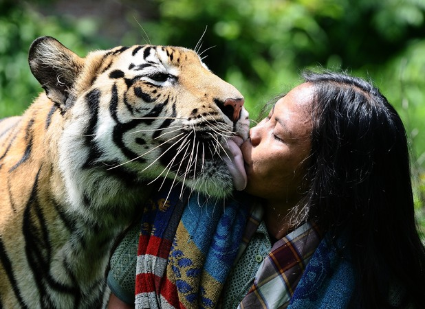 Abdullah Sholeh, best friends with a tiger