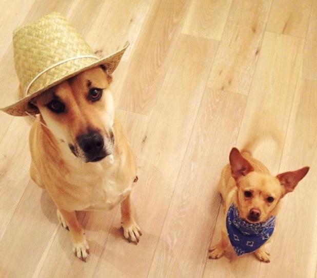 "Lauren Conrad celebrates 28th birthday with cowboy ""hoedown"", dogs wear hats - 7.2.2014"