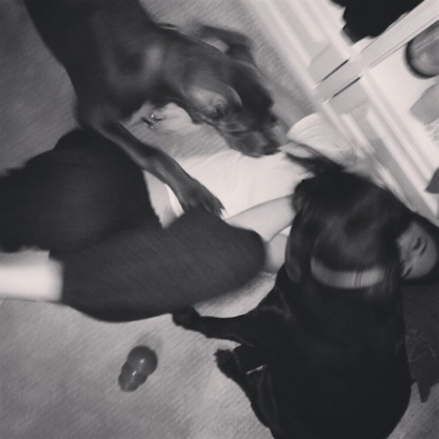 Kendall Jenner plays with her dogs in LA - 18.2.2014