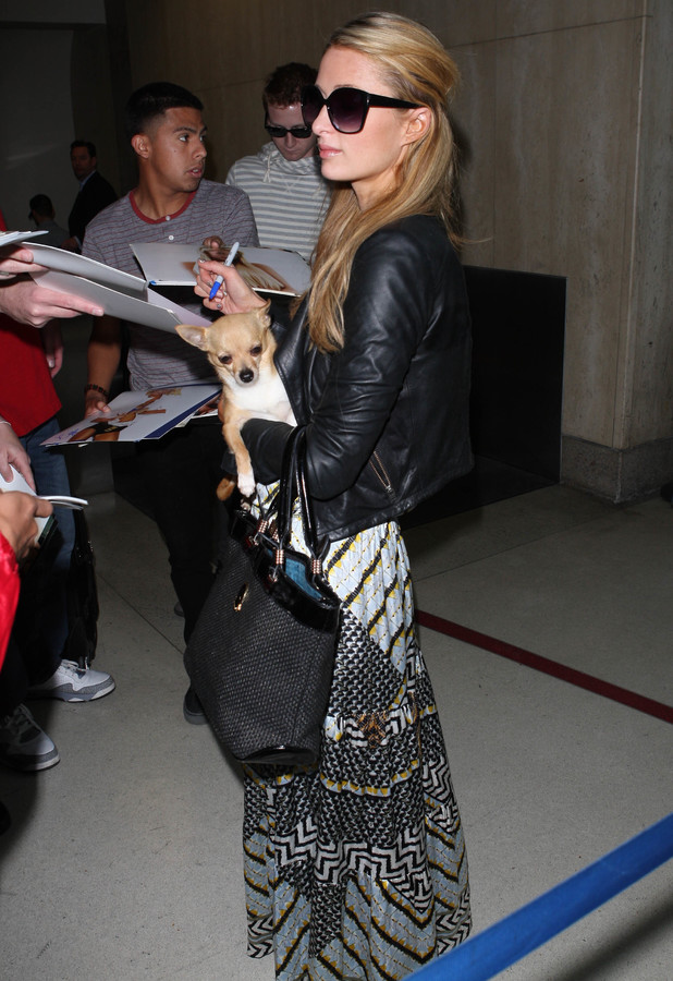 Paris Hilton lands in LAX airport with her pet dog Peter Pan - Los Angeles, America - 25 February 2014