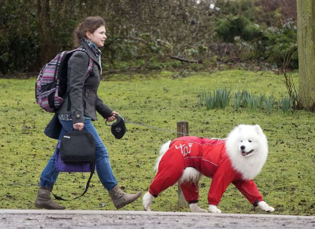 Dogs in onesies at Crufts