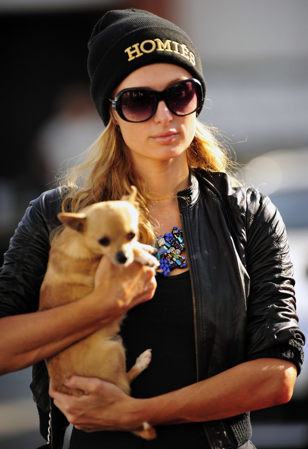 Paris Hilton and her pet dog Peter Pan out in Beverly Hills, Los Angeles - 7 March 2014