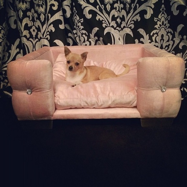 Paris Hilton's pet dog Peter Pan in his pink cushioned bed - Los Angeles, America - 3 April 2014