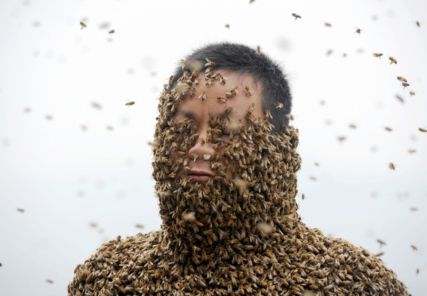 Bee keeper breaking world record