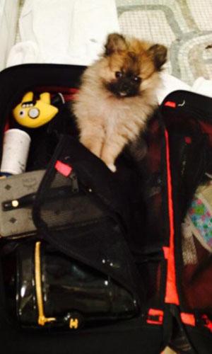 Miley Cyrus' new puppy Moonie, April 2014