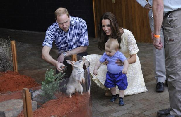Prince George meets a bilby in Australia, 20 April 2014