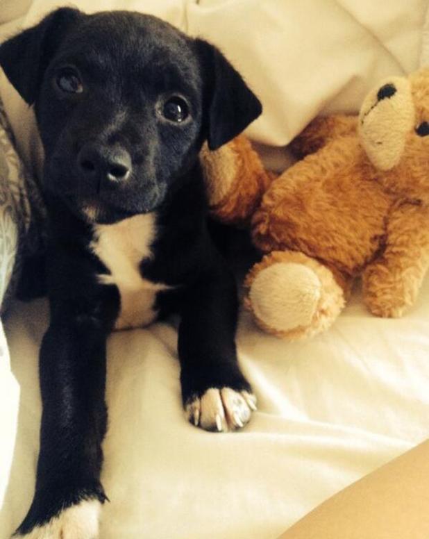 TOWIE's Lydia Bright gets a gorgeous black puppy - 16 April 2014