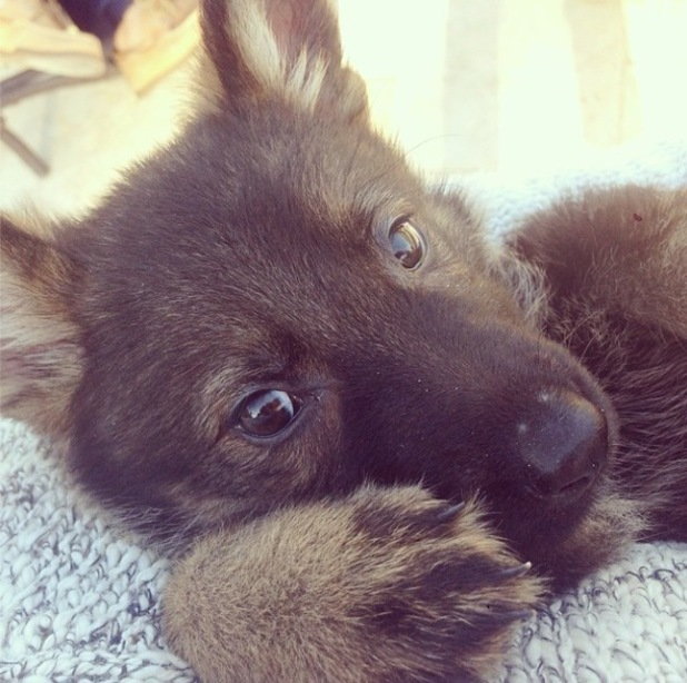 Lauren Conrad shares a picture of her new puppy - 27 April 2014