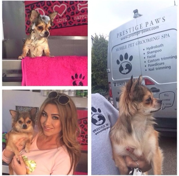 Lauren Goodger's little dog, Mimi has hair and nails done by prestige paws mobile doggy spa, 21 May 2014