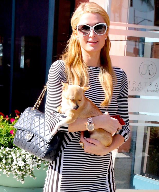Paris Hilton leaves office with her chihuahua, 6 June 2014