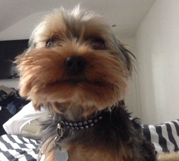 TOWIE's Jessica Wright shares funny picture of her dog Bella - 19 June 2014