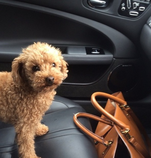 Mollie King's dog Alfie