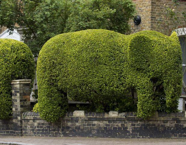 Green elephant hedge by Tim Bushe