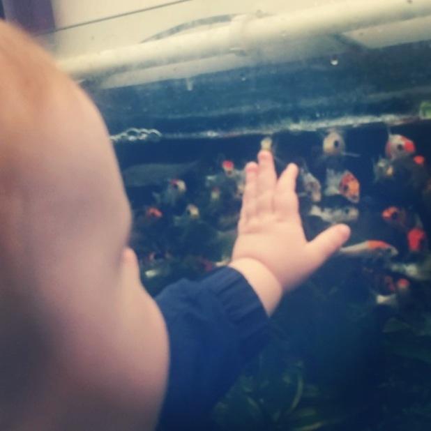 TOWIE's Dan Osborne buys his son Teddy some goldfish, has bathtime - 11 July 2014