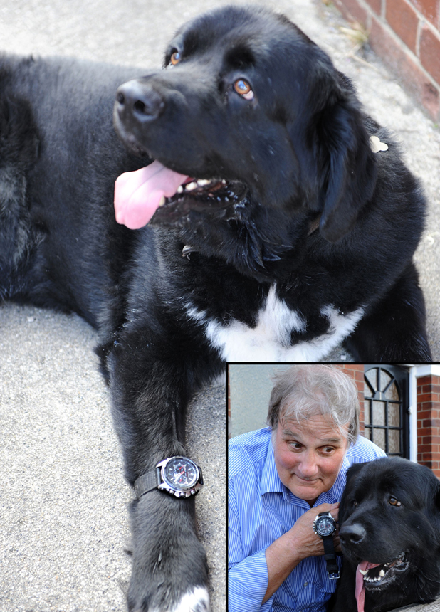 Man discovers mising watch swallowed by dog after alarm goes off in its stomach, Cockwood, Devon, Britain - 26 Jul 2014