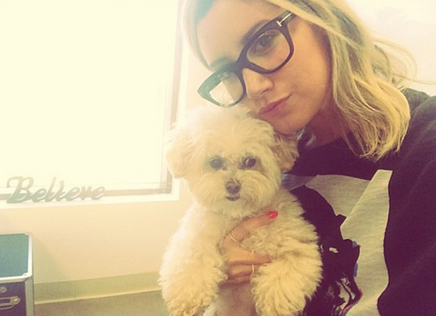 Ashley Tisdale brings her dog Maui to work, August 2014