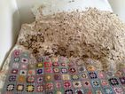 Man discovers giant wasp nest in his mum's spare room!