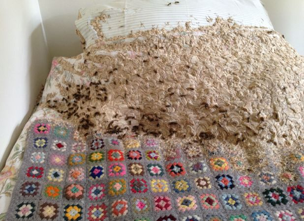 Unnamed woman had a giant wasp nest in her spare bedroom