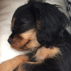 Naya Rivera shows off her beautiful new puppy Emmy, August 2014