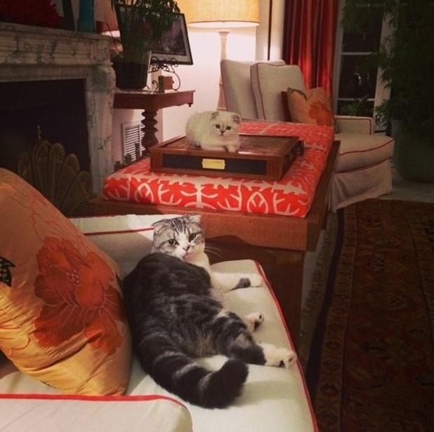Taylor Swift jokes she's interrupted an important conversation between cats Meredith and Olivia, August 2014