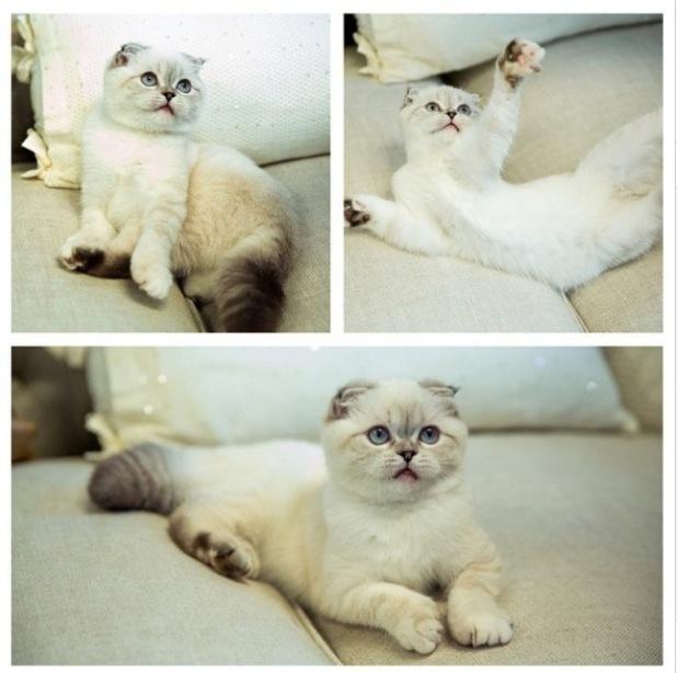 Taylor Swift's cat, Olivia Benson from her Instagram. 10/10/14