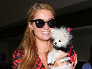 Paris Hilton and pup Prince Hilton rock matching outfits at LAX airport