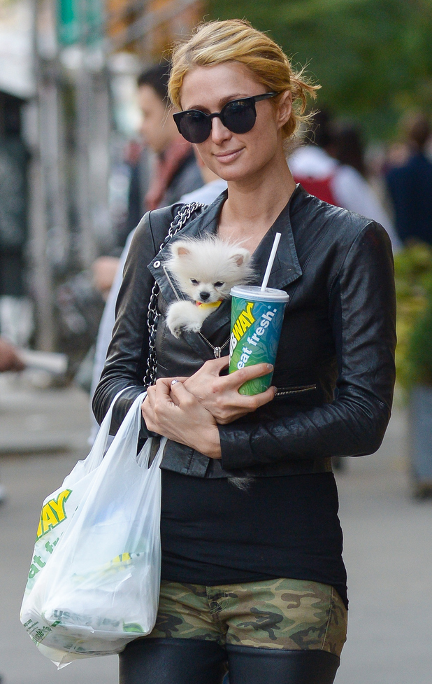 Paris Hilton takes Prince Hilton The Pom to buy some food in New York, America - 20 October 2014