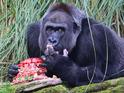 GBBO finalist Richard Burr bakes cake for London Zoo's oldest gorilla 23 October