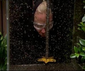 Green ants im a celebrity