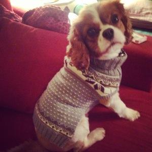 Binky Felstead gives dog Scrumbles a Christmas Jumper 24 November