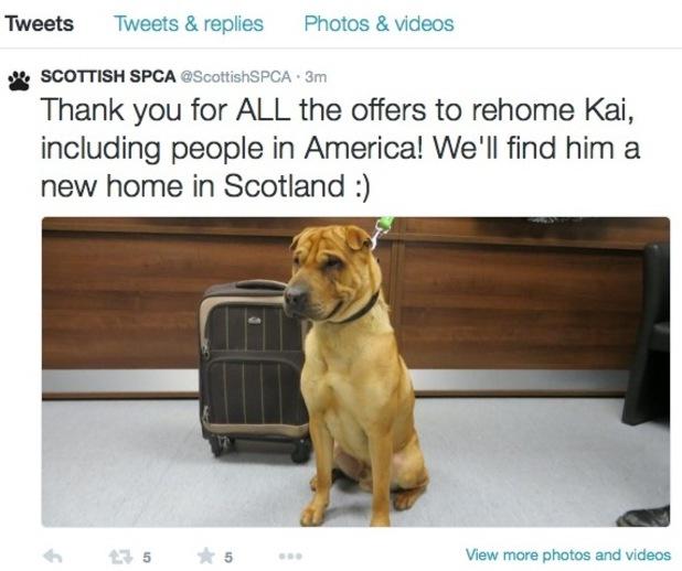 Kai the dog