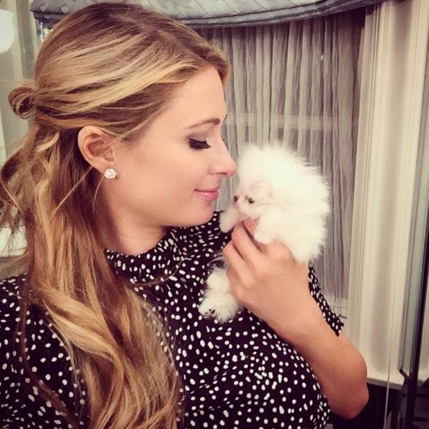 Paris Hilton adopts a new fluffy white puppy - 7 January 2015