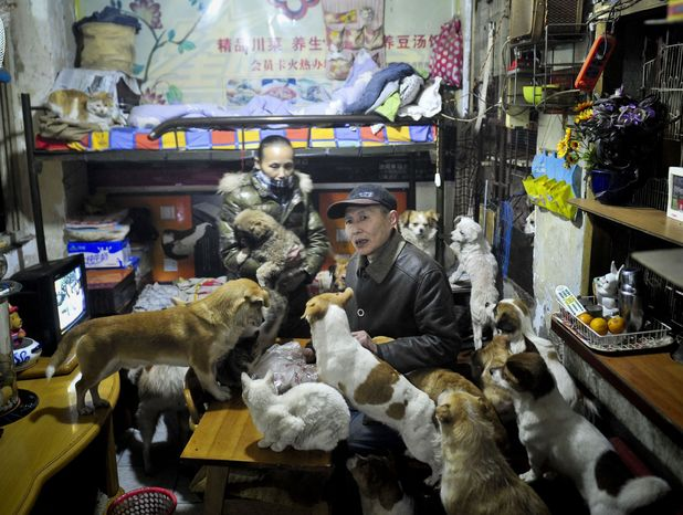 Couple adopt 60 dogs and cats in Chengdu city, Sichuan province, China