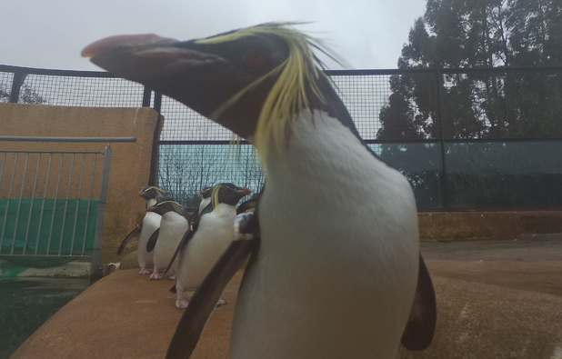 Penguin selfie at Edinburgh Zoo