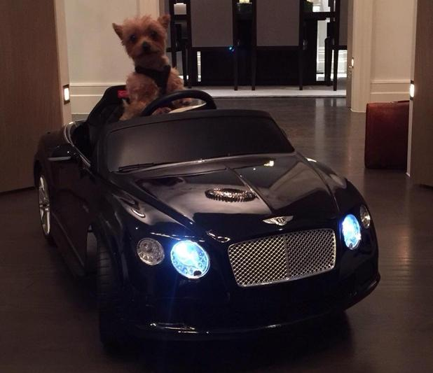 Simon Cowell's dog Diddly takes a ride in a Bentley - 5 Feb 2015