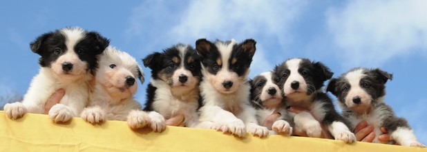 Dogs Trust name their puppies after The Kardashians, Ilfracombe, Devon 4 March