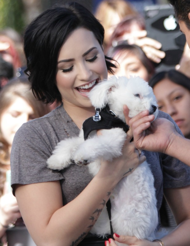 Demi Lovato appears on 'Extra' with puppy Buddy, 3 March 2015