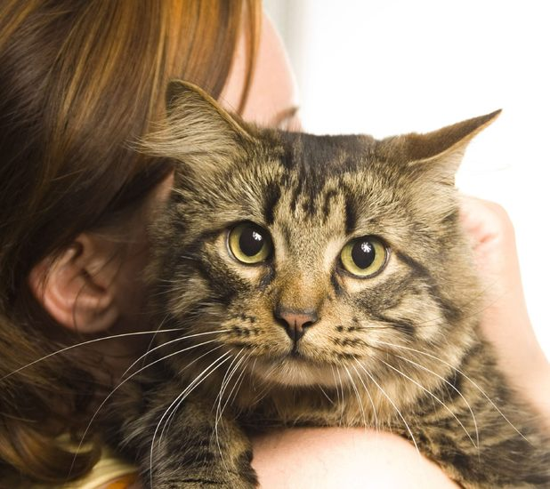 Missing moggy George is found 100 miles from home