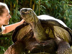 100-year-old tortoise gets given special birthday treat!