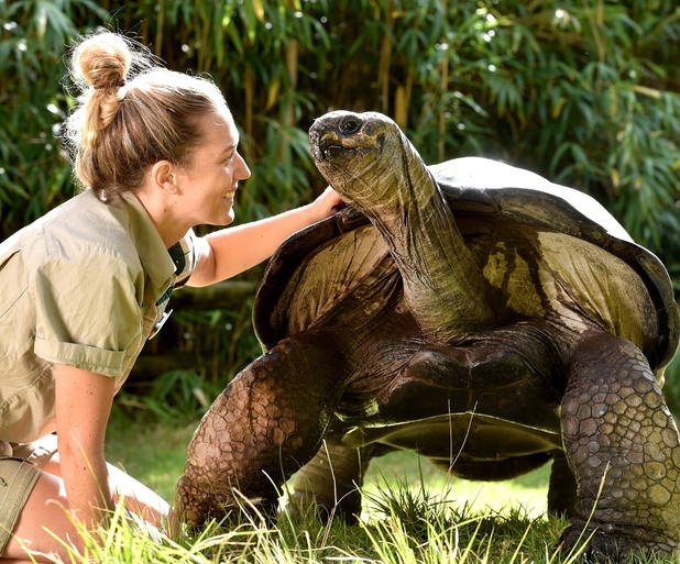 Giant tortoise turns 100 years old at Melbourne Zoo, Australia 23 April
